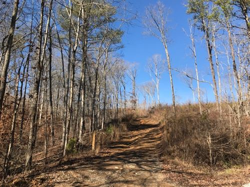 70 +/- Wooded Acres : Ranger : Pickens County : Georgia