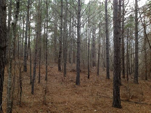 48 Acres In Bibb County : Brent : Bibb County : Alabama