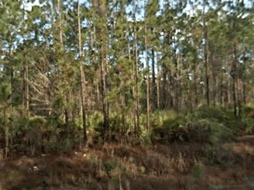 Owner Finance Vacant Acreage : Palatka : Putnam County : Florida