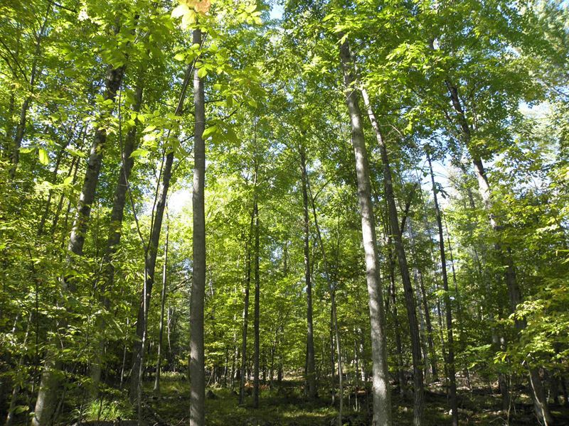 Flagstaff Mountain Forest : Chesterfield : Essex County : New York
