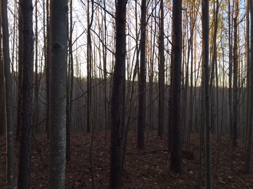 13 +/-Acre Wooded Near State Forest : South Pittsburg : Marion County : Tennessee