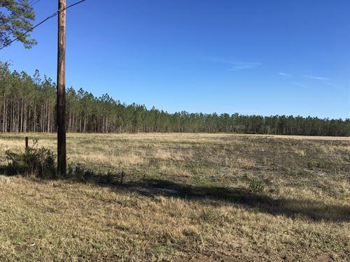 6.51+/- Acres Land For Sale : Kingsland : Camden County : Georgia