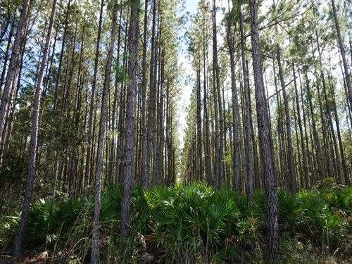 Jones Tract Timberland Investment : Interlachen : Putnam County : Florida