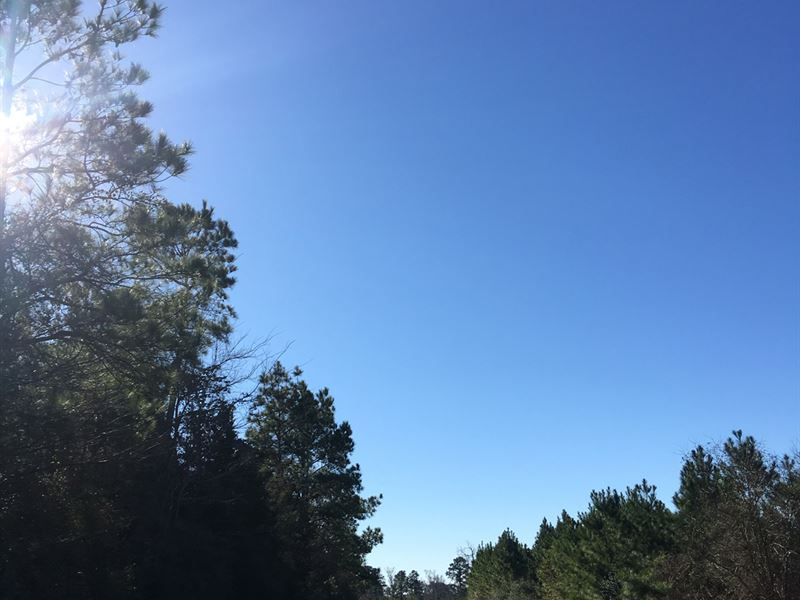 61 Acres Ray Marsh Road : Livingston : Polk County : Texas