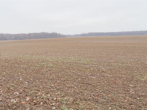 Jeffrey Rd - 24 Acres : Homerville : Medina County : Ohio