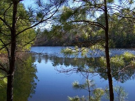 145 Acres - Pasture, Lake & Timber : Notasulga : Macon County : Alabama