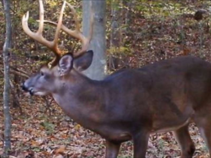 Deer lease louisiana with camper hookups