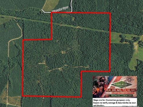 286 Ac - Pine Plantation & Hunt : Pine Bluff : Jefferson County : Arkansas