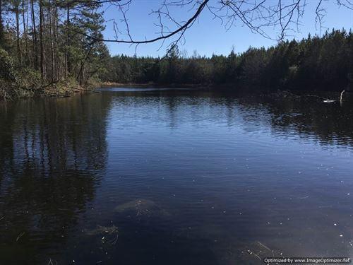 Premier Hunting In Sw Mississippi : Heidelberg : Jasper County : Mississippi