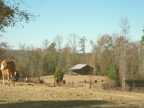 113 Acre Horse & Cattle Farm : Tallassee : Macon County : Alabama