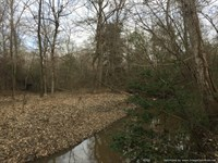 70+/- Ac Adjoins National Forest : Roxie : Franklin County : Mississippi