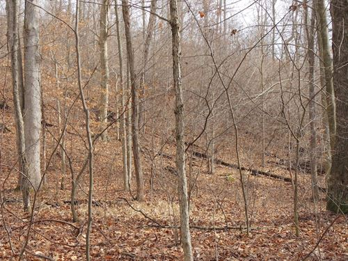 Nalley Rd - 16 Acres : Graysville : Monroe County : Ohio