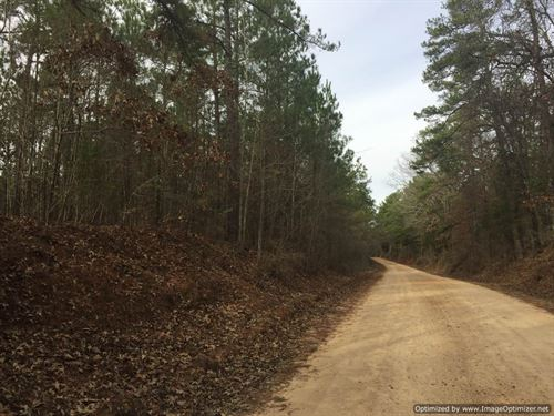 101+/- Hunting/Timber Invstment : Winona : Carroll County : Mississippi