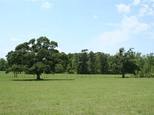 Fife 165 : Montgomery County : Texas