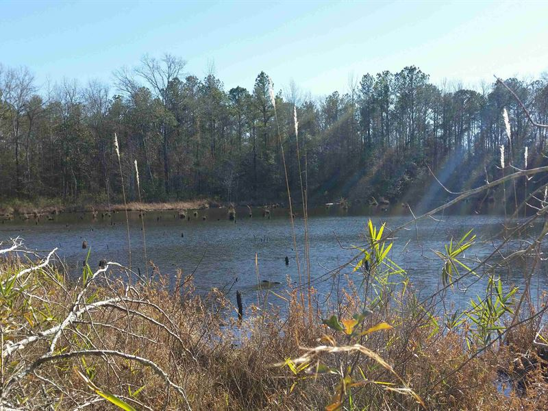 Fantastic Hunting : Tuskegee : Macon County : Alabama