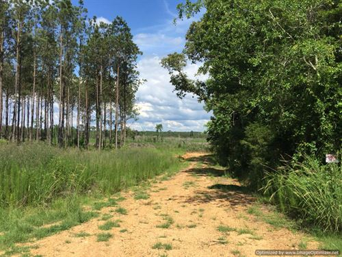 57.16+/- Ac In Wesson School Dist : Wesson : Copiah County : Mississippi