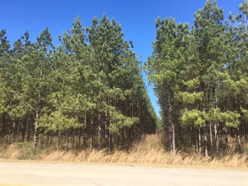 10 Wooded Acres : Osyka : Pike County : Mississippi