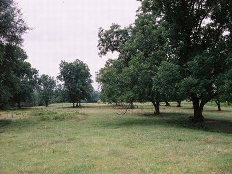 786 Acres of Crop and Pasture Land : Auburn : Lee County : Alabama