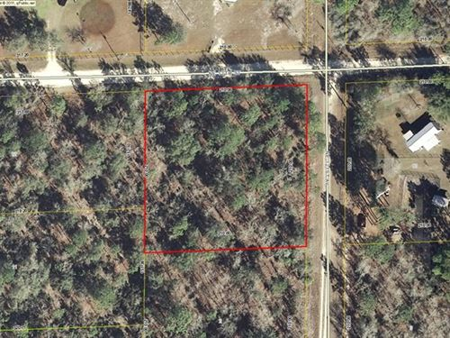 1 Acre Corner Wooded Lot 773186 : Williston : Levy County : Florida