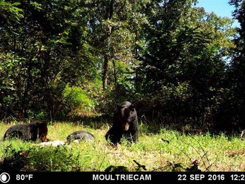 Hunter's Take Notice : Norwood : Douglas County : Missouri