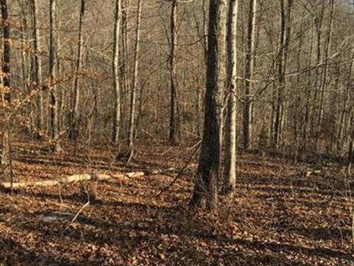 27 Acres Close To Lake : Somerset : Pulaski County : Kentucky