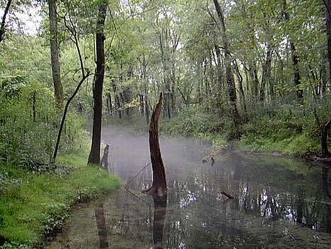 754 Acres - Farm/Development Land : Paint Rock : Jackson County : Alabama
