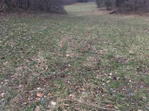 37 Acres Mature Timber : Somerset : Pulaski County : Kentucky