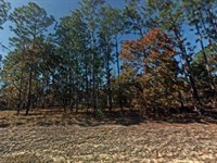 .25 Acre In Dunnellon, Fl : Dunnellon : Levy County : Florida