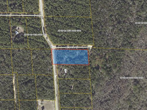 Mobile Home On 2.31 Acres : Old Town : Dixie County : Florida
