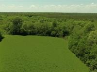 Beaver Creek Recreation & Timber : Geiger : Sumter County : Alabama