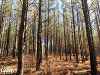 Hunting And Recreational Land : Washington : Wilkes County : Georgia