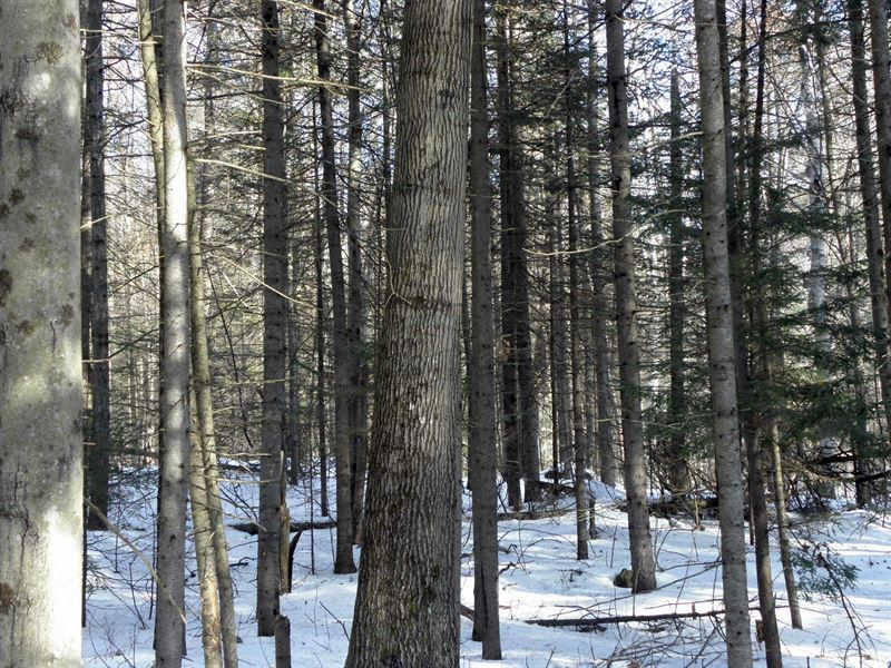 Hollow Road Forest : Day : Saratoga County : New York
