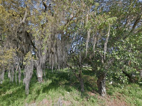 Residential Lot For Sale In Tampa : Tampa : Hillsborough County : Florida