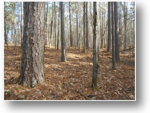 116 Acres In Montgomery County : Kilmichael : Montgomery County : Mississippi
