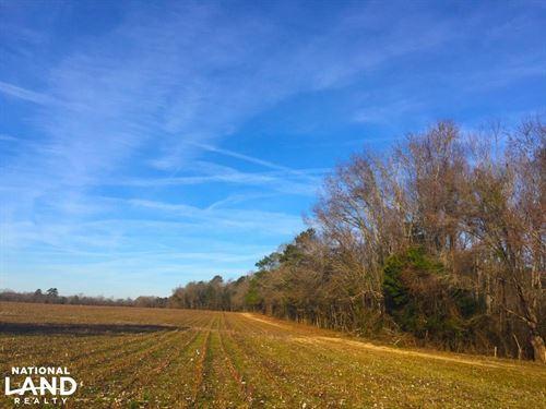 Lamar Recreational And Tillable Far : Lamar : Darlington County : South Carolina