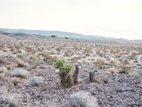 5 Acre Joshua Tree With Water : Joshua Tree : San Bernardino County : California