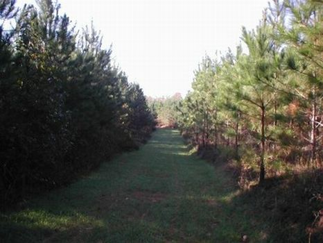 97 Acres - Timber Investment : Goodwater : Coosa County : Alabama