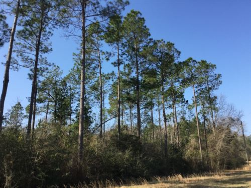 Tedder Road Tract : Century : Escambia County : Florida
