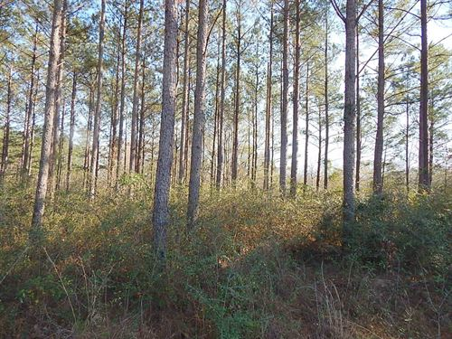 Armstrong Road - 125269 : Columbia : Marion County : Mississippi