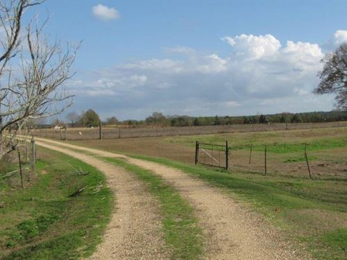 34 Acres - Kelly Lowery Rd : Sandy Hook : Walthall County : Mississippi