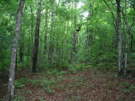 69 Acres with Creeks and Hardwoods : Forsyth : Monroe County : Georgia