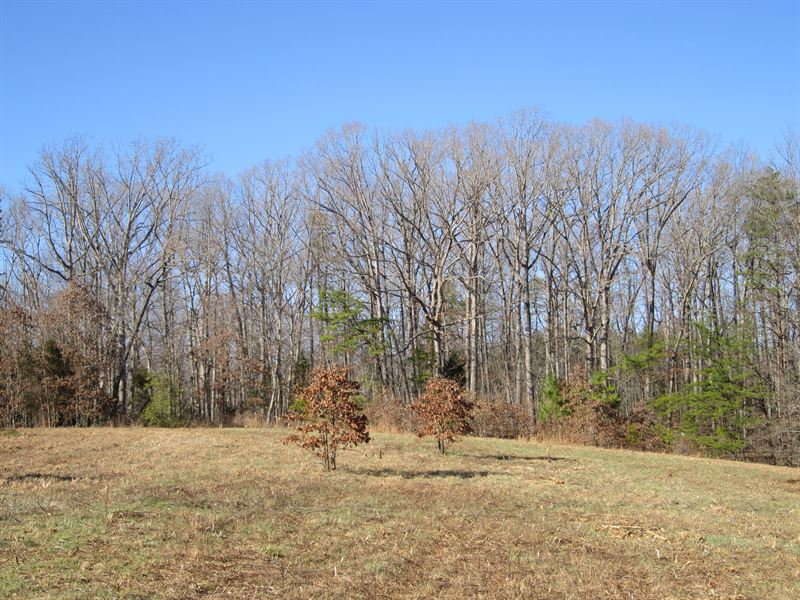 Darling Of Dixie Hill : Buckingham : Buckingham County : Virginia