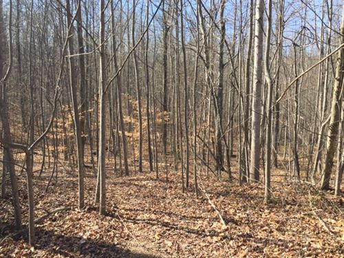 4.79 Wooded Tract Close To Town : South Pittsburg : Marion County : Tennessee