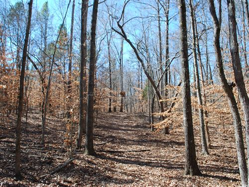 28 Ac. Tract With Lots Of Hardwoods : Buffalo : Union County : South Carolina