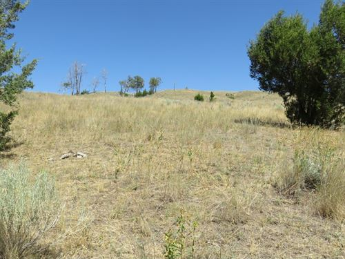 Buzzer Lode, Jackpot And More : Anaconda : Deer Lodge County : Montana
