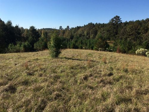 Hunting Land For Sale Jefferson Ms : Pattison : Jefferson County : Mississippi