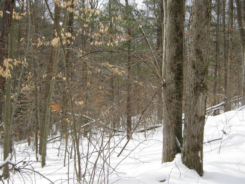 18 Acres Near Ithaca Ny & Forest : Danby : Tompkins County : New York