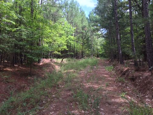 297+/- Ac Hunting Tract : Water Valley : Lafayette County : Mississippi