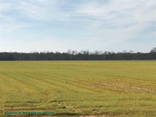 Lecompte, La Farmland Auction : Lecompte : Rapides Parish : Louisiana