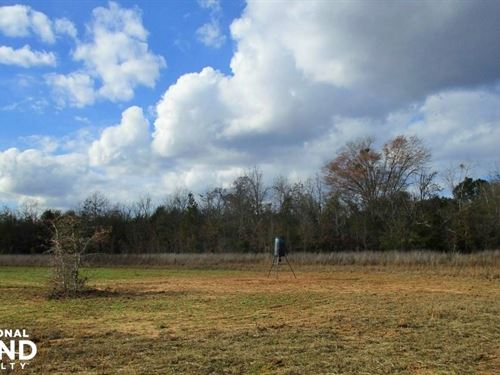 245 Acres Lumpkin Hunting, Timber, : Lumpkin : Stewart County : Georgia